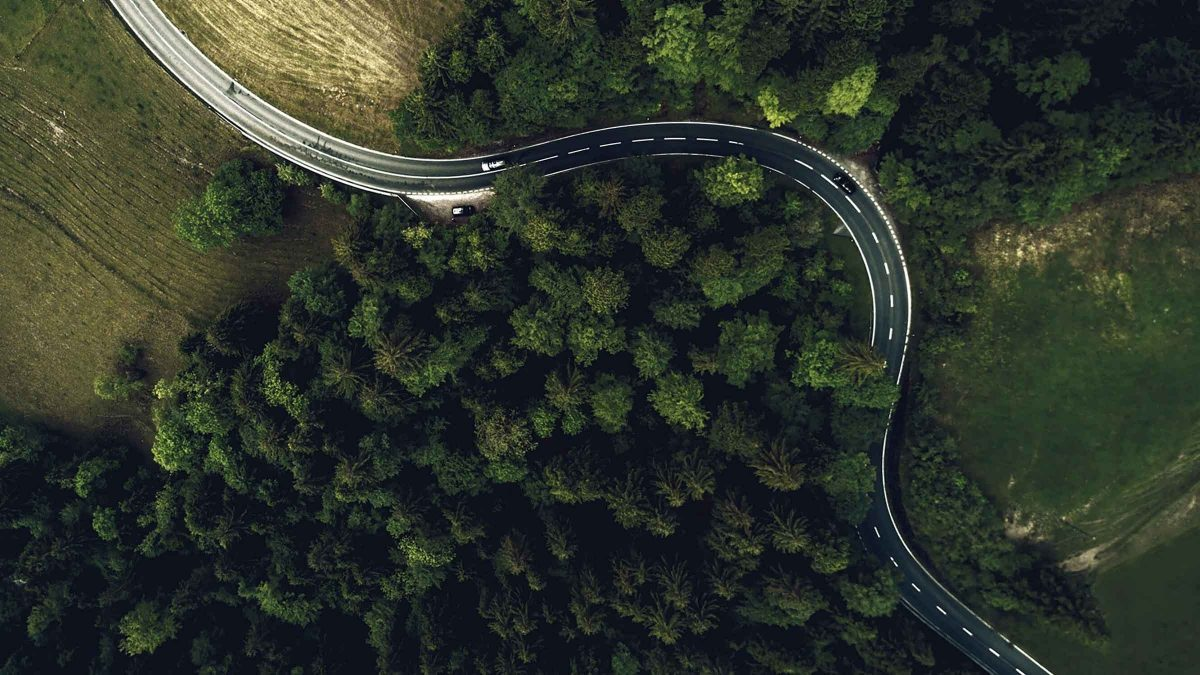 road winding through forest